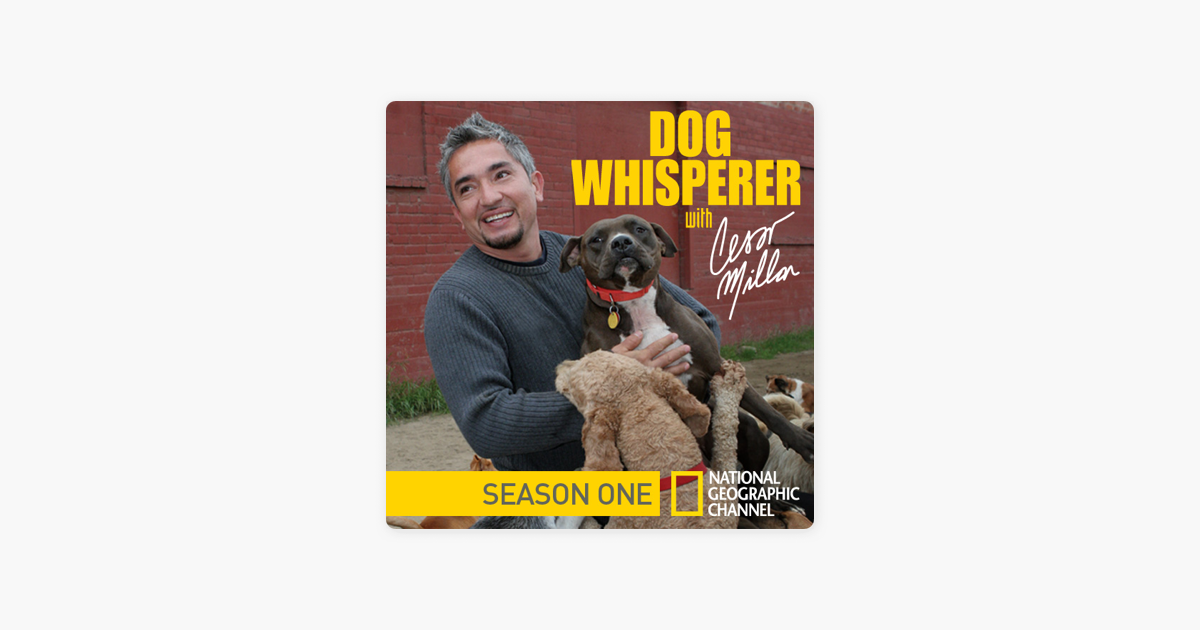 dog whisperer season 7 episode 6
