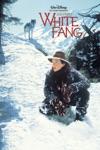 White Fang wiki, synopsis