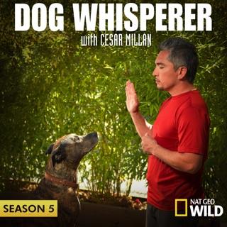 dog whisperer season 6 episode 3