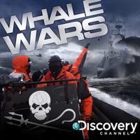 Télécharger Whale Wars, Series 2 Episode 11