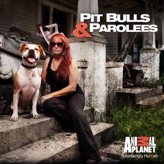 Pit Bulls and Parolees, Season 9 en iTunes