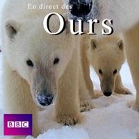 Télécharger En direct des ours Episode 1