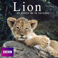 Télécharger Lion en direct de la savanne Episode 1