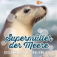 Supermütter der Meere - Seelöwen vor Australiens Küste