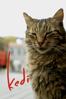 Kedi - Ceyda Torun