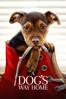 A Dog's Way Home - Charles Martin Smith