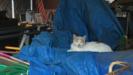 柵の横のネコ