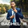 The Bachelor - 2503  artwork
