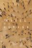 Marea humana - Ai Weiwei