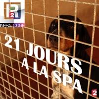 Télécharger Infrarouge : 21 jours à la SPA Episode 1