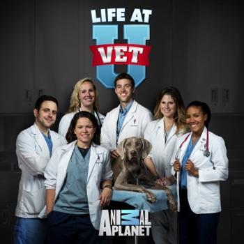 Dr  Dee: Alaska Vet on Apple TV